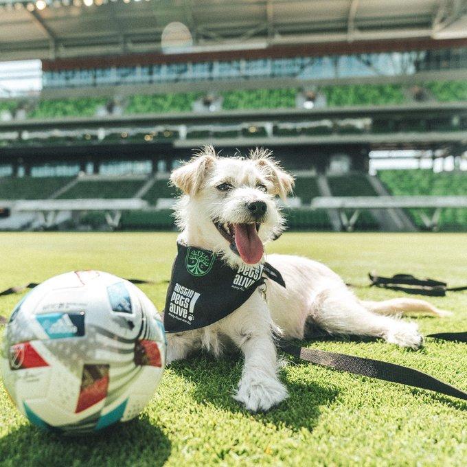 Austin FC & Austin Pets Alive! honorary mascot dog